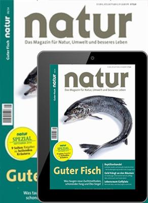 natur Print + Digital