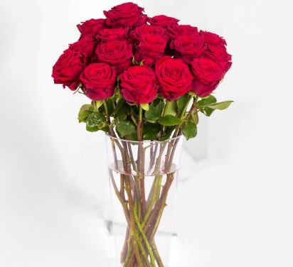 miflora rote rose