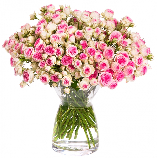 06-0015-rosenbymiflora-mimi-eden-pb