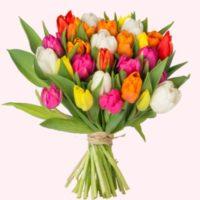 36 bunte Tulpen blumeideal