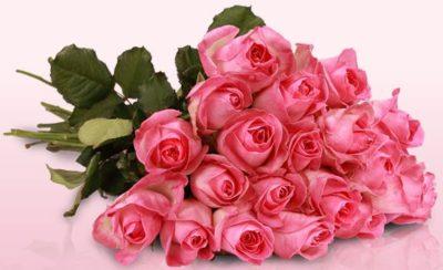 2016-10-04-11_06_11-lovely-pink-rosa-rosen-mit-limonium