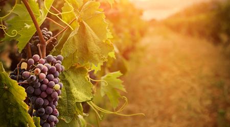 wijngaarden terra alta