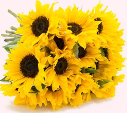 Blueideal Sonnenblumen bestellen