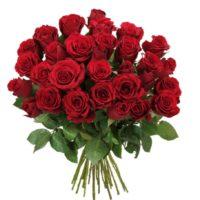 Rosenrausch Red