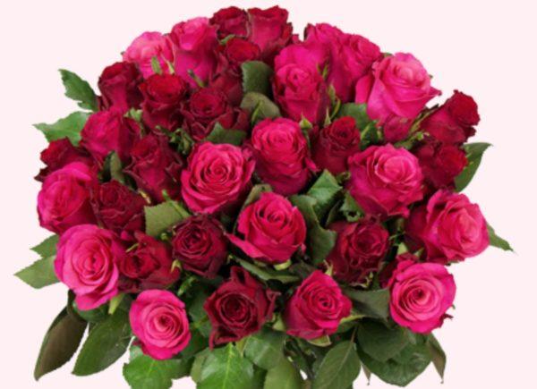 rosen passion