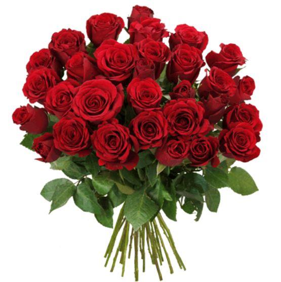 Blumeideal Rosen