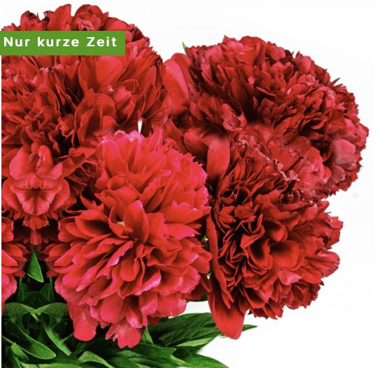 Pfingstrosen online bestellen BlumeIdeal.de 2019 05 15 16 54 49
