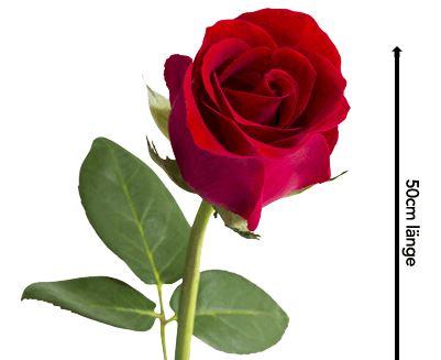 Rosen Roulette   Blumeideal