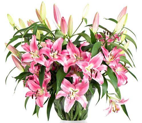 Blumeideal 17 Lilien Strauss 1