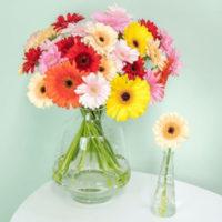 41 bunte Gerbera Blumeideal