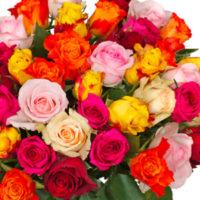 sweetroses blume ideal