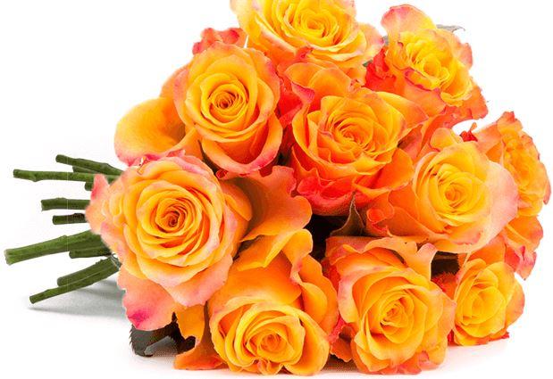 33 Rosen orange Blumeideal 1