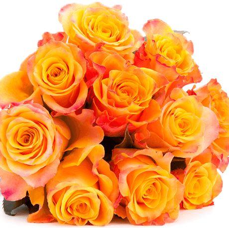 33 Rosen orange Blumeideal