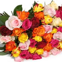 55 bunte Rosen online bestellen Blumeideal
