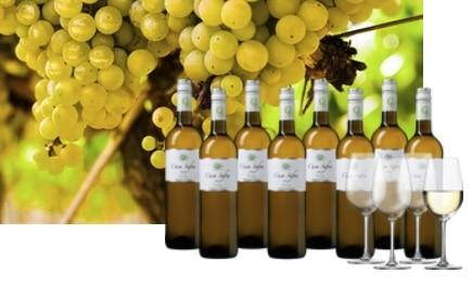 8x spanischer Casa Safra Wein + 4 Gläser