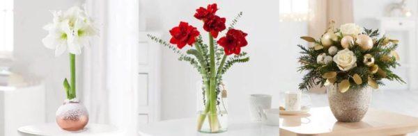 Blume2000 30 Prozent auf Weihachtsblumen
