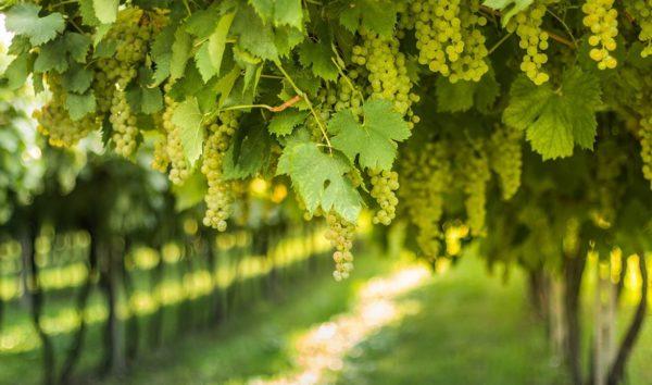 2019 02 15 12 58 04 Casa Safra Verdejo 2017   Weinvorteil.de