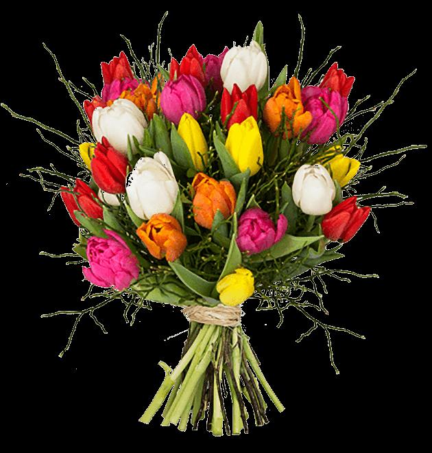 tulpen modern love