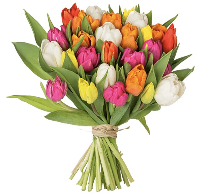 33 bunte Tulpen online bestellen BlumeIdeal.de 2019 04 02 11 20 56