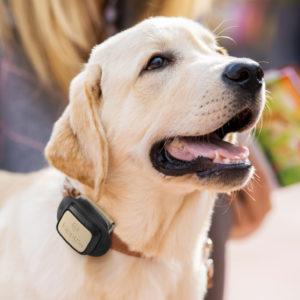 Smarter GPS-Tracker 🐶  für nur 20€ (für Haustiere & Co.)