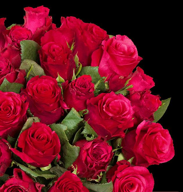38 rote rosen