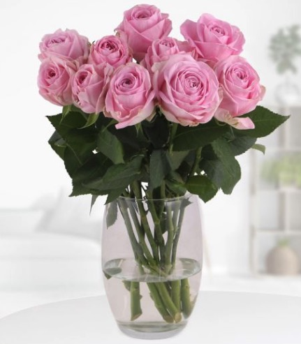 10 Rosa Rosen 50cm