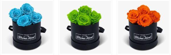Infinity Rosen bei BlumeIdeal