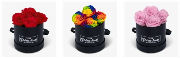 Rosen Infinity Rosen bei BlumeIdeal