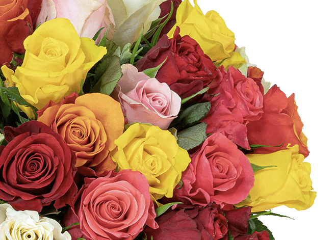 45 bunte Rosen im Angebot online bestellen BlumeIdeal.de 2019 10 15 11 15