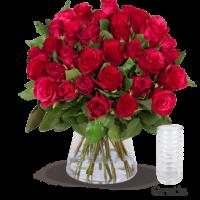rote rosen vase web