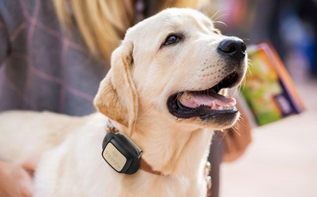 Kippy Vita GPS Hundetracker Vodafone V SIM und 12 Monate Datenpaket von Vodafone