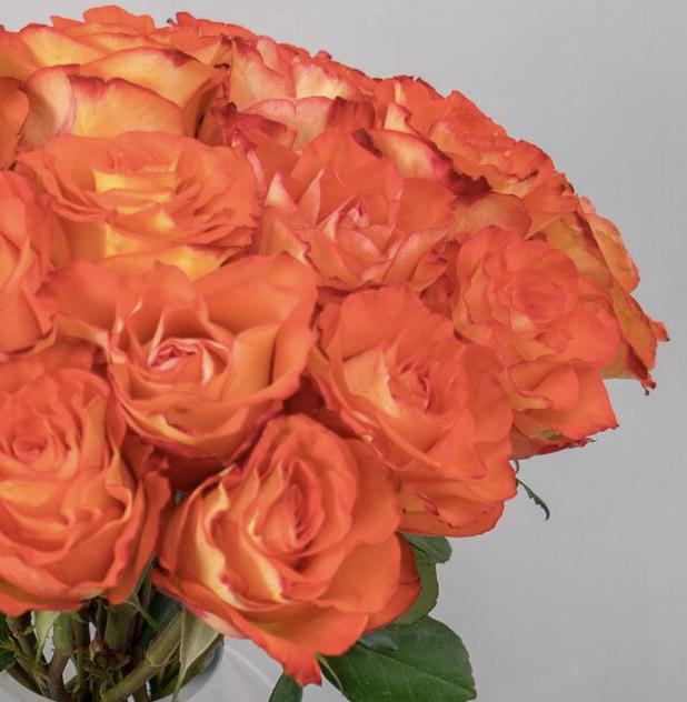 20 50 orange Rosen online verschicken BlumeIdeal.de 2019 09 24 10 56 28