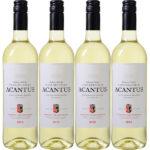 6x spanischer Acantus Weißwein