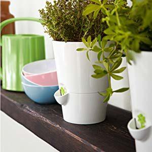 🌿 Emsa Fresh Herbs Kräutertopf (mit autom. Bewässerung)