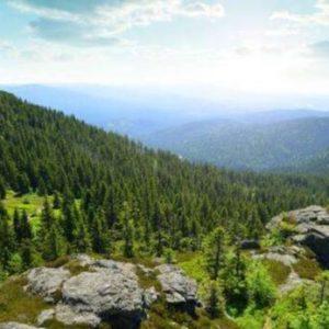 lidl reisen bayerischer wald
