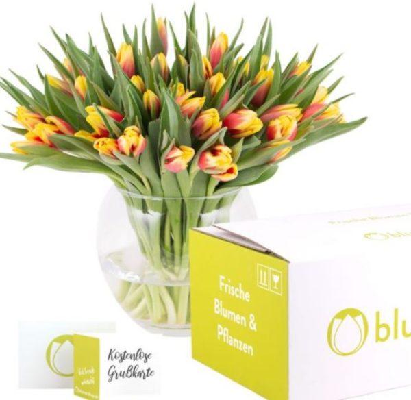 40 zweifarbige Tulpen rot gelb  2 gratis Mini Schoki