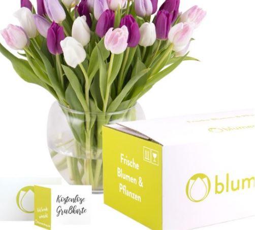 Tulpen   Blumenshop