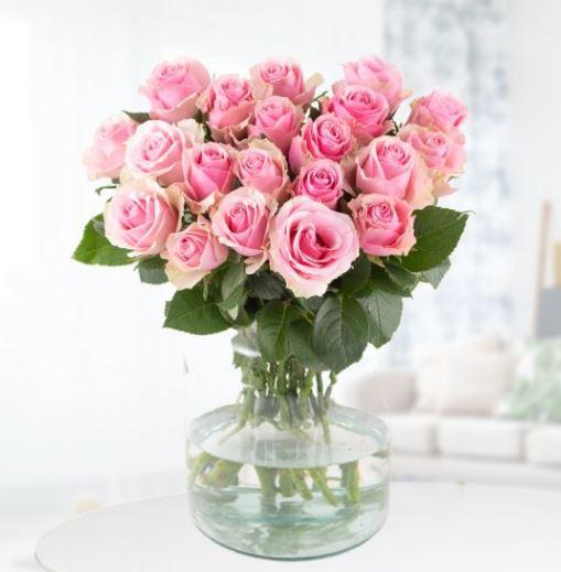 20 Rosa Rosen 40cm
