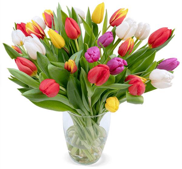 30 bunte Tulpen