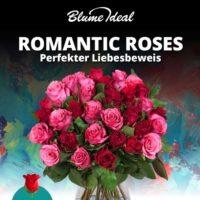 Blumenstrauss mit 36 Rosen