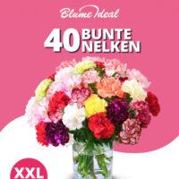 Blumeideal 40 bunte Nelken fuer 25
