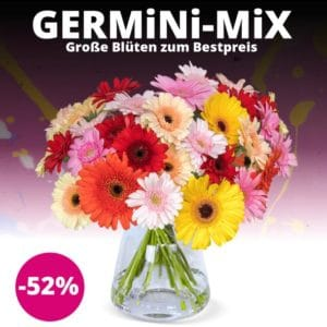 Blumenstrauß mit 41 Gerbera