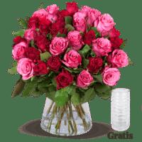 25 rot-pinke Rosen inkl. GRATIS Vase