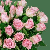 40 roséfarbene Rosen