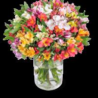 40 Inkalilien mit bis zu 400 Blüten