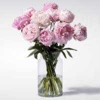 Pfingstrosen in Rosa 10 Stiele  Blume2000.de 2021 06 17