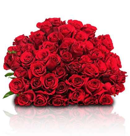 41 rote rosen fuer 24 98 bei blume ideal 1