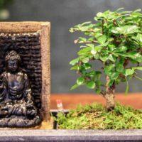 exotischer Bonsai Baum mit dekorativem Stein  oder Buddha Wasserfall