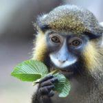 Gratis Eintritt im Münchner Tierpark Hellabrunn für Kinder an Fasching