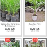 palmenmann de hat zwischen 17 75 diverse palmen reduziert